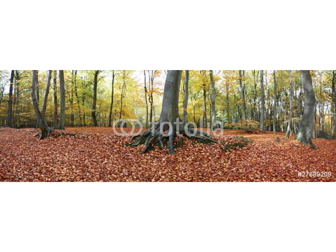 Photo wallpaper Autumn leaves 64238
