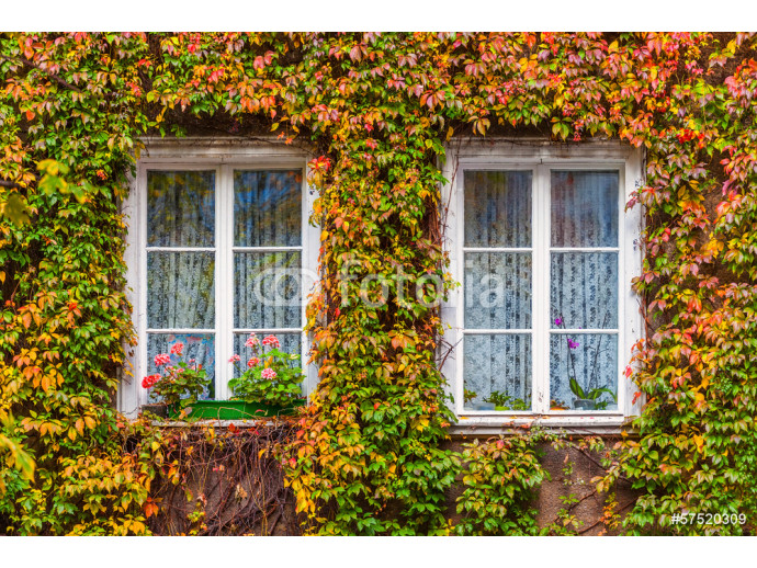 Overgrown window of an old house 64238