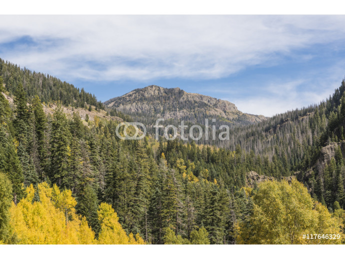 Golden aspen and pine trees forest in the San Juan Mountains in Colorado during fall 64238