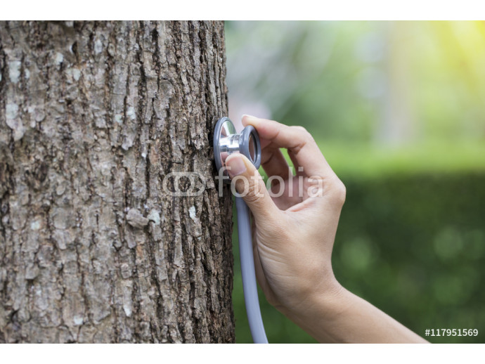 woman hand listens to a tree with a stethoscope, concept love th 64238