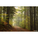 Path through the autumnal forest in foggy weather 64238