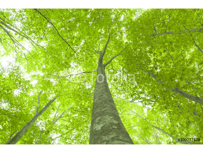Beautiful green forest in early summer. 64238