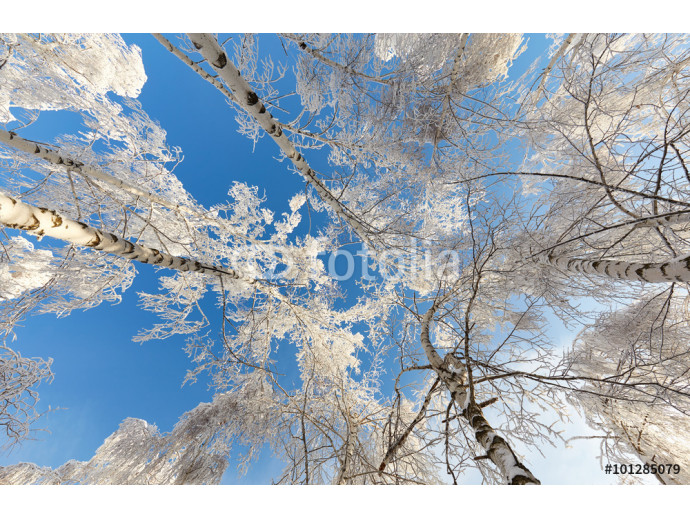 Beautiful winter forest in the bright sunny day - a photo 12 64238