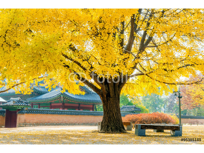 Autumn in Gyeongbukgung Palace,Korea. 64238