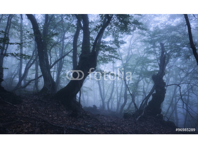 Dark autumn forest in fog. Beautiful natural landscape. 64238
