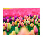 Photo Wallpaper Field of tulips 60348 additionalThumb 1