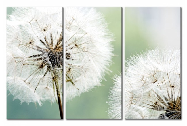 Fluffy Dandelions [Glass] 92568 additionalImage 1