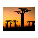 Papier peint Baobabs africains 61398 additionalThumb 1
