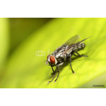 Fly insect 64239