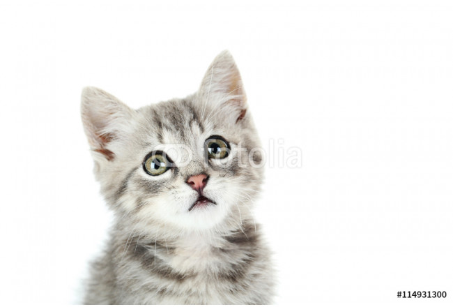 Beautiful cat on a white background 64239