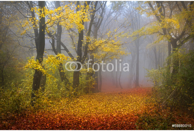 Fairytale foggy forest for child and fantasy books 64239