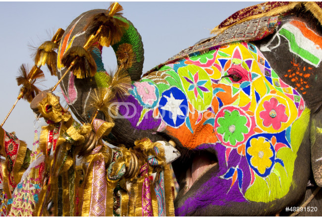 Decorated elephant at the elephant festival in Jaipur. 64239