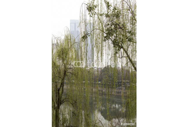 spring scenery in a park,chengdu,china 64239