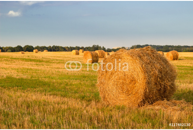 Dry hay stacks on countryside field during harvest time - sunset 64239