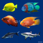 Set of tropical fish. Isolated on blue. Hight res. 64239