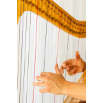 Hands playing celtic harp close-up 64239