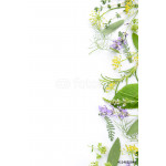 variety of fresh herbs on white background 64239