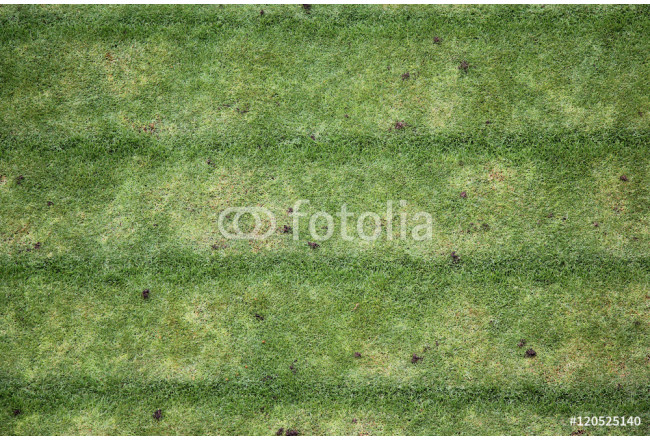 Garden grass mown to form different color rows 64239