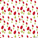 pattern tulip flower close-up 64239