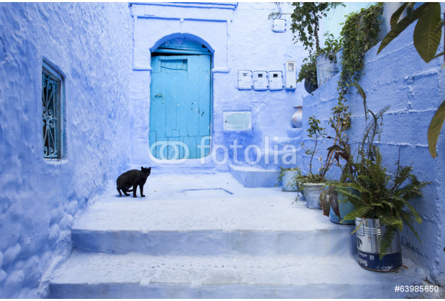 Cats on street in medina of blue town Chefchaouen, Morocco 64239