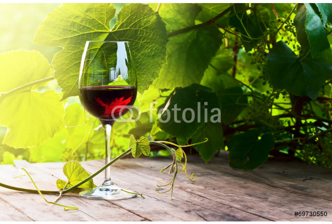 red wine 64239