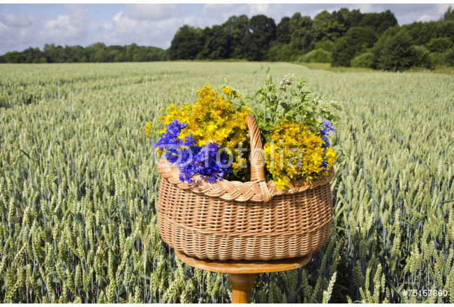 still-life with basket and medical herbs  on wheat field 64239