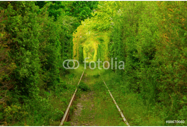 Tunnel -like path covered with bushes and trees with light at the end 64239
