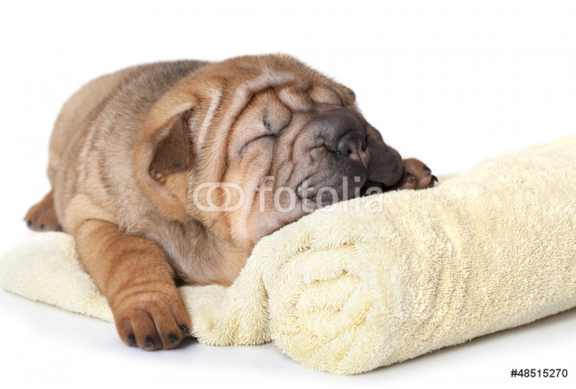 Puppy with a towel 64239