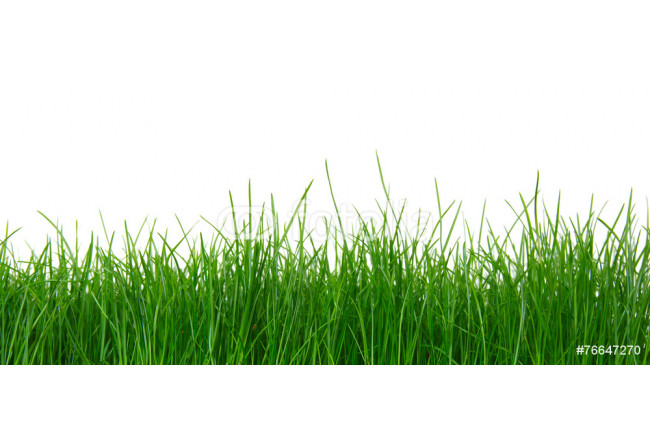 Green grass on white background 64239