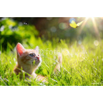 art Young cat / kitten hunting a ladybug with Back Lit 64239