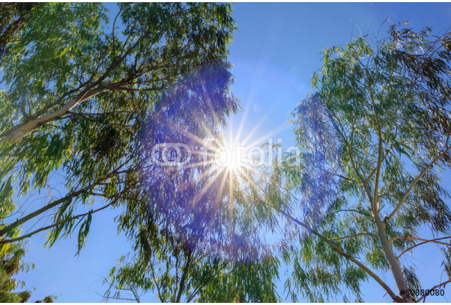 Looking up to the tree with the sun background 64239
