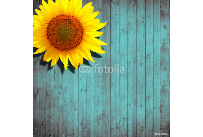 Art painting sunflower leaning on turquoise wooden background 64239