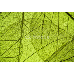 green leaf texture - in detail 64239