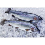 whole fresh fish trout on ice 64239
