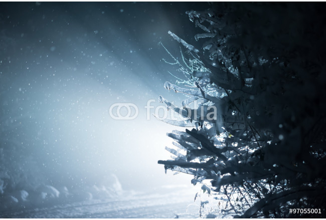 Cuadro decorativo tree covered with fresh snow at winter night 64239
