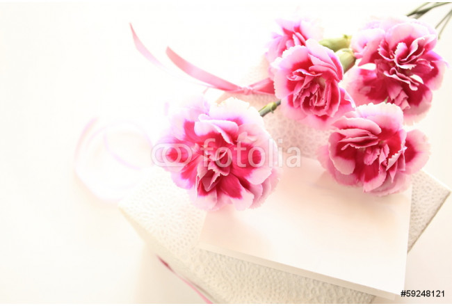 Pink and white bicolor carnation on white background  64239