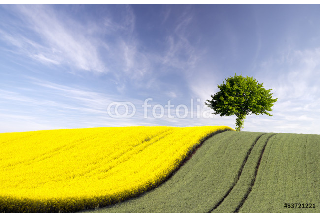 Painting lonely tree in a field  64239