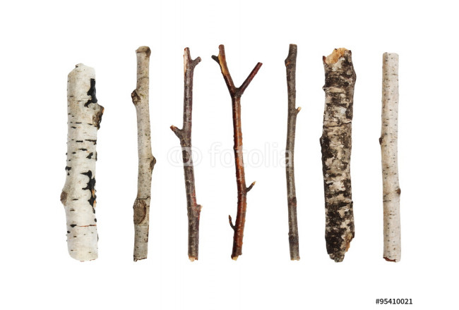 Cuadro decorativo Twigs, set macro dry branches birch isolated on white background,  with clipping path 64239