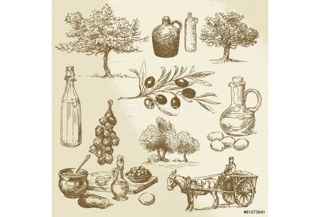 harvest and olive product - hand drawn collection 64239