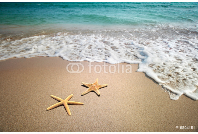 two starfish on a beach 64239