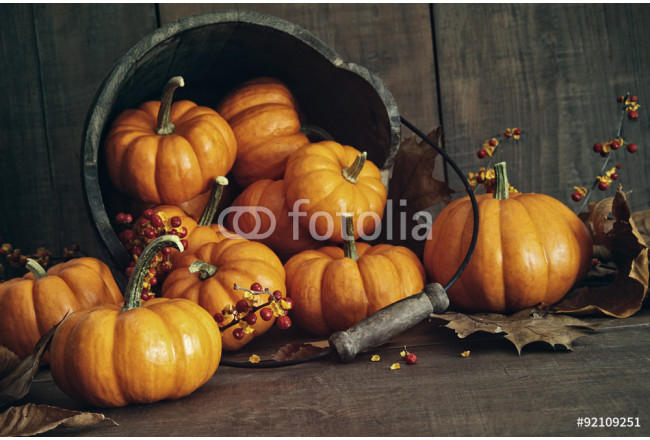Fall still life with small pumpkins in bucket 64239