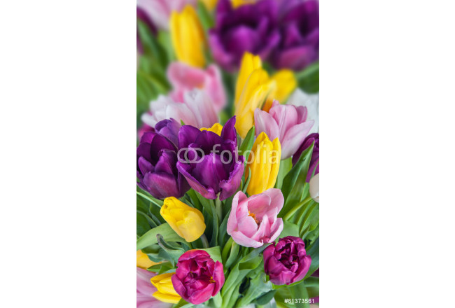 Beautiful Tulips Flowers background 64239