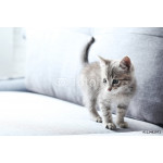 Beautiful little cat on a grey sofa 64239