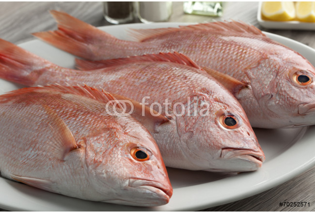 Fresh red snappers 64239