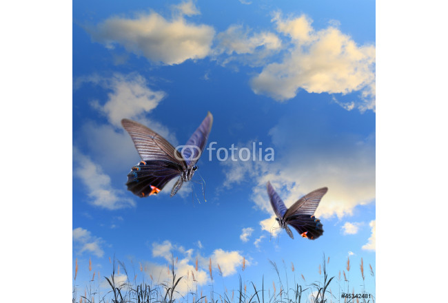 Butterfly and beautiful sky and cloud 64239