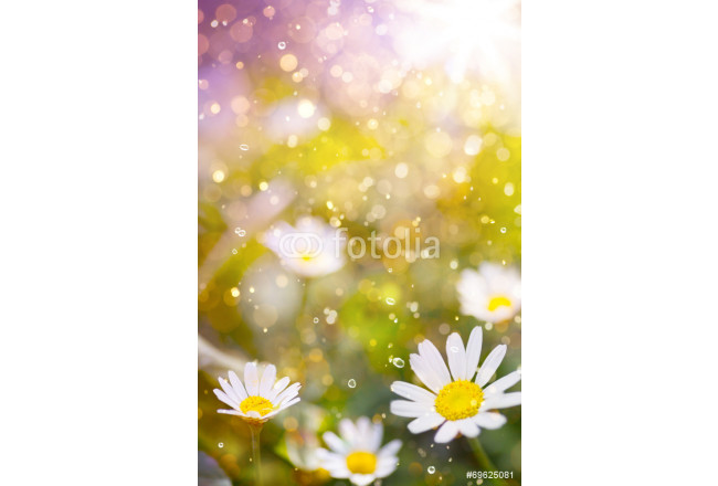 Art Beautiful floral border beautiful blurred background 64239