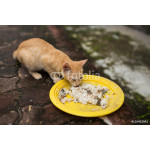 cats eating rice 64239