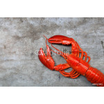 Red lobster, the best of lobster in the world 64239