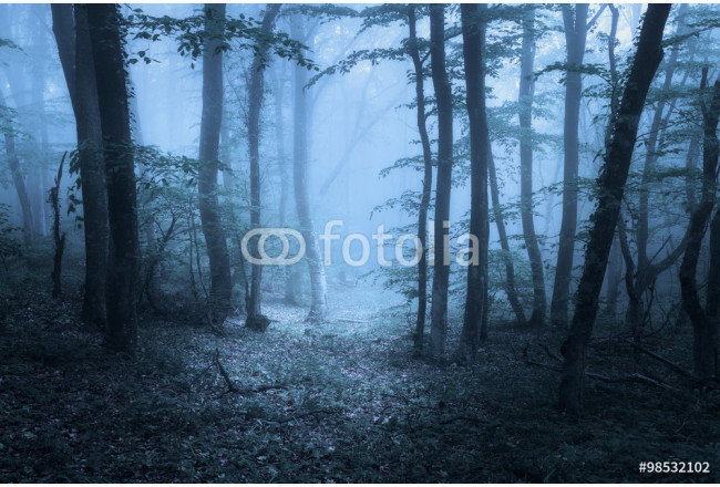 Springa forest in fog. Beautiful natural landscape. Vintage style 64239