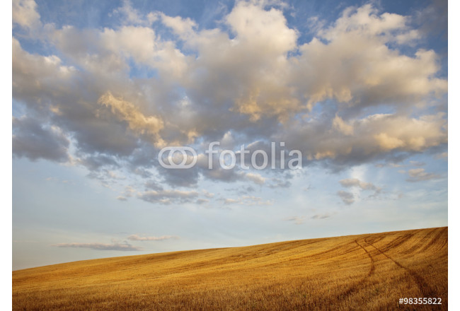 Dramatic Clouds Over Golden Harvested Field 64239